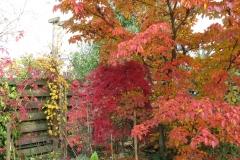 Herbststimmung Ende Oktober