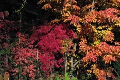 Herbststimmung mit Strahler