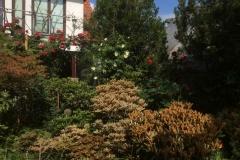 Schönlaubige Rhododendren