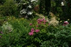 Überblick: Filipendula purpurea Kio Kanaka