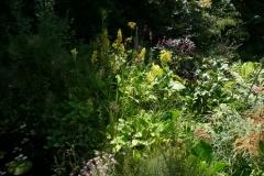 Überblick: Primula florindae